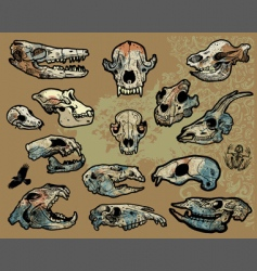 animal skulls vector image