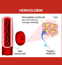 Molecule haemoglobin vector