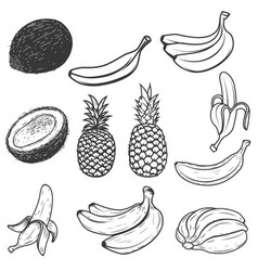 Set of tropical fruits isolated on white vector