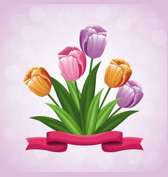 beauty tulips flower ribbon ornament vector image vector image
