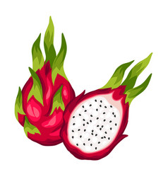 Dragon fruit isolated on white background vector