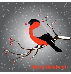 Bullfinch on rowan branch snow merry christmas vector image vector image