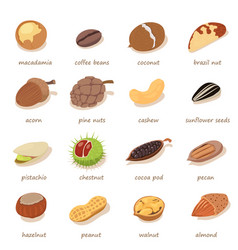 nuts and seeds icons set isometric style vector image