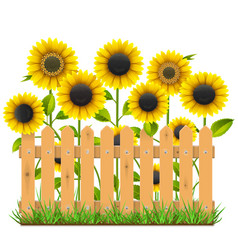Wooden fence with sunflowers vector
