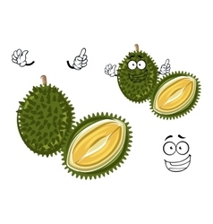 Chinese green spiky durian cartoon character vector