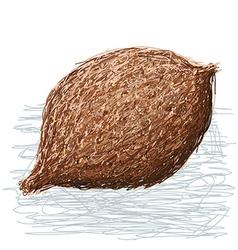 False durian nut whole vector