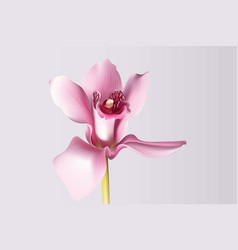 Orchid flower background beautiful postcard for vector