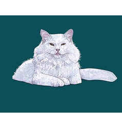 White furry cat on white vector image vector image