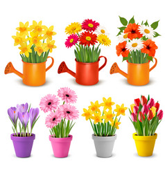 spring and summer colorful flowers in pots vector image