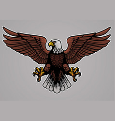 Bald eagle spread his wings vector