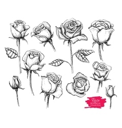 Hand drawn botanical rose set engraved vector