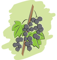 bunch of black currant vector image vector image