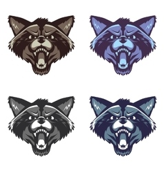 Angry raccoon face on white background vector