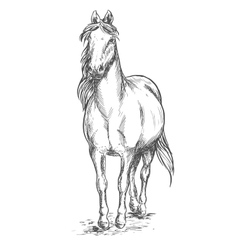 Walking white horse sketch portrait vector image vector image