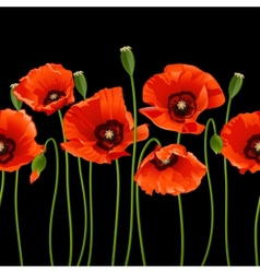 Red poppies in a row vector