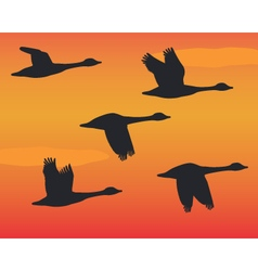 Flock of silhouette geese in flight vector