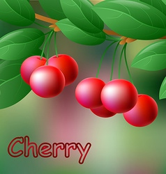 Red juicy sweet cherries on a branch for your vector image