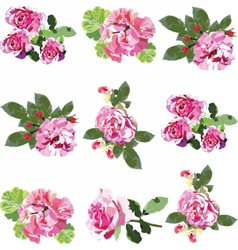 Pink Rose flowers set vector image