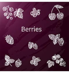 Chalk berries vector