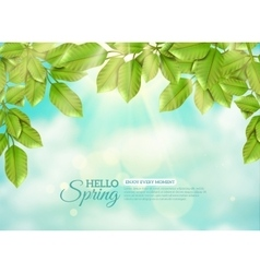Green leaves in rays of spring sun vector