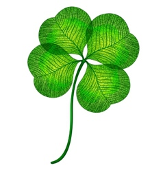 Four leaf clover isolated EPS10 vector image vector image