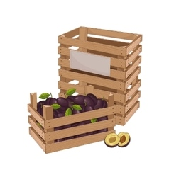 Wooden box full of plum isolated vector image