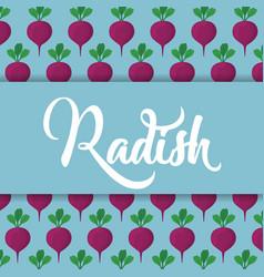 Radish vegetable icon vector