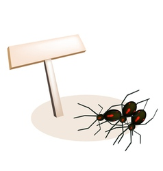 Evil spiders and wooden placard vector