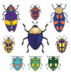 Beetles set of vector