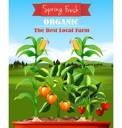Fresh vegetables in the farm vector image