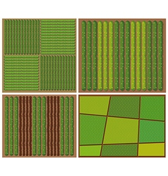Pattern of crops from top view vector