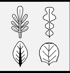 beautiful and natural leaves of plants vector image