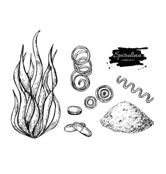Spirulina seaweed powder hand drawn vector