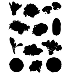 Collection of silhouettes of cabbage vector image vector image