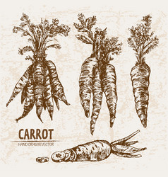 Digital detailed line art carrot vector