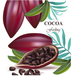 Cocoa beans realistic detailed exotic vector
