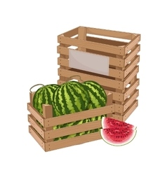 Wooden box full of watermelon isolated vector