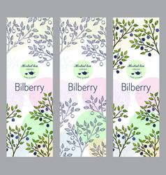 herbal tea collection bilberry banner set vector image