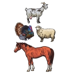 Set of farm animals on the white background vector