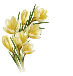 Crocus flowers vector