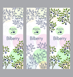 herbal tea collection bilberry banner set vector image vector image