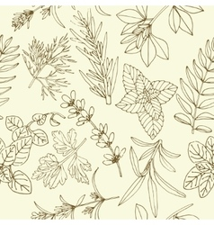 Herbs seamless pattern vector image vector image