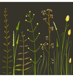 Wild Field Flowers and Grass on Black vector image vector image