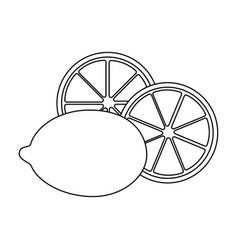 isolated three lemon vector image