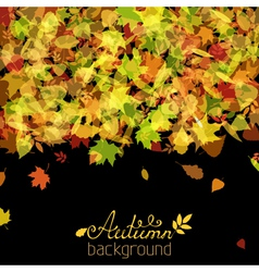 Set of various autumn leaves silhouettes on black vector
