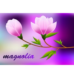 Spring magnolia background with blossom brunch of vector
