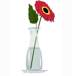 Gerbera in vase vector