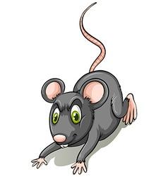 Black rat vector image vector image