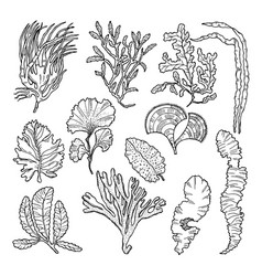 Marine sketch with different underwater plants vector