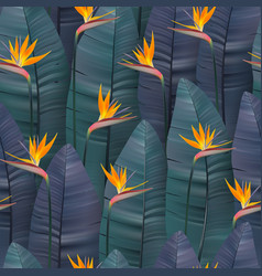 seamless pattern with tropical strelitzia vector image